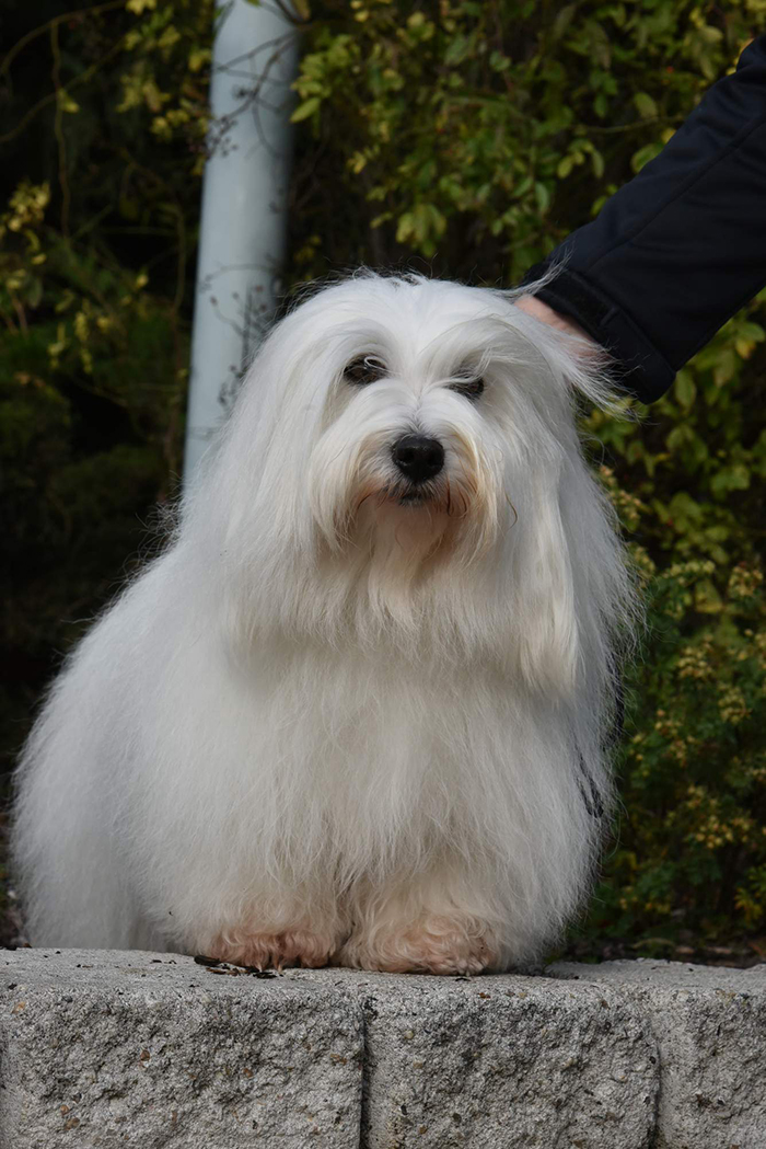 Coton se Tuleár 20 years of breeding experience